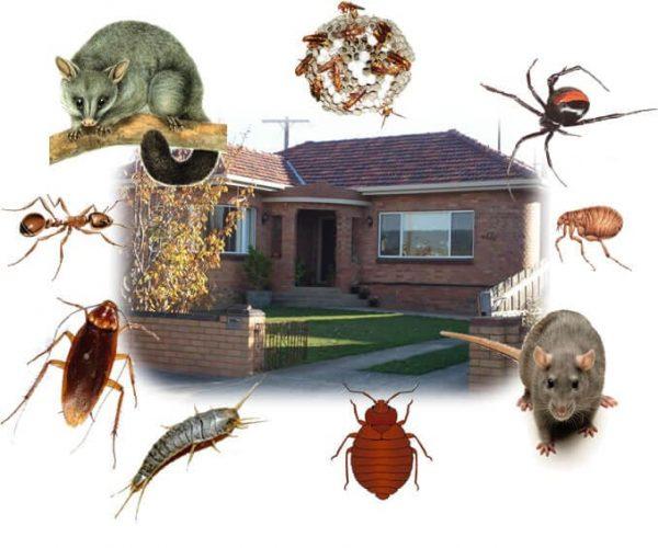 مكافحة حشرات المدينة المنورة