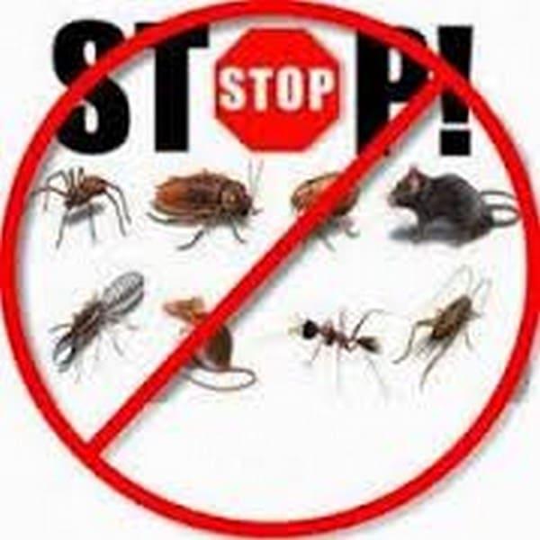مكافحة حشرات وعيره